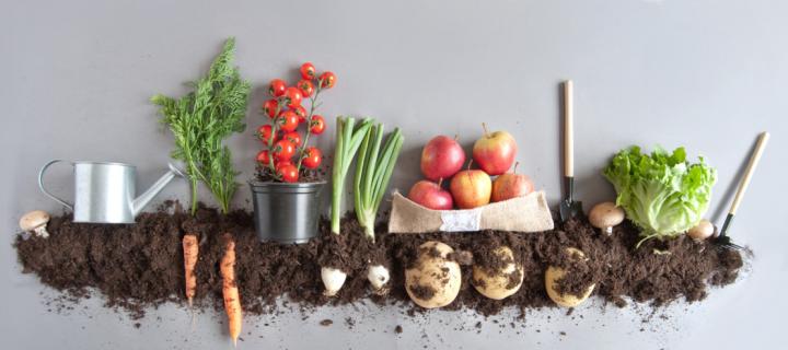 Jardinage : comment installer un potager et manger des fruits et légumes plus que locaux ?