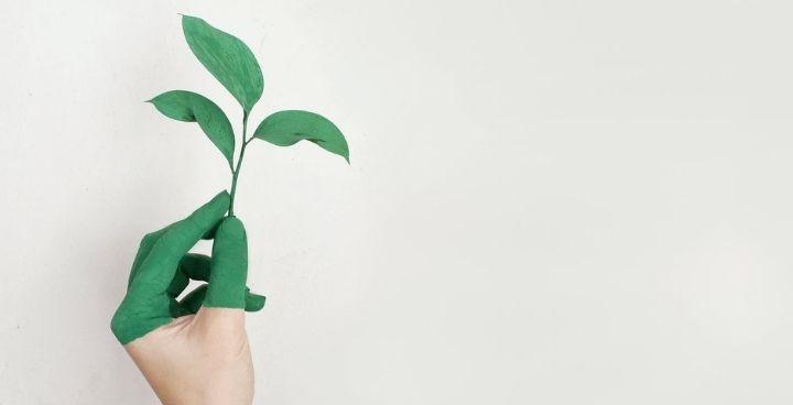 Petit manuel et grandes idées pour réussir sa transition écologique